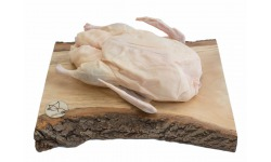 Kačica Kráľov cca 2,5kg - Kráľov Brod