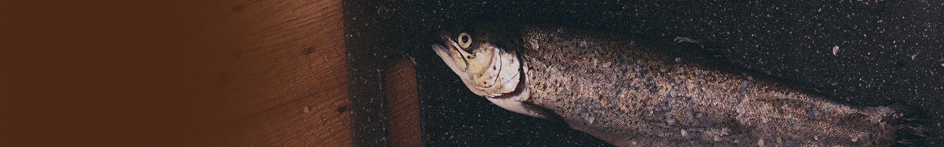 Údené ryby