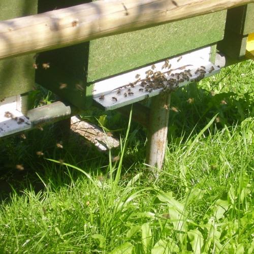 Bee - farm Richvald